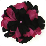 Z: Black/Raspberry Peony Bloom
