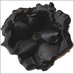 Z: Black Small Rose Bloom