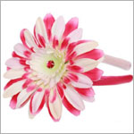 Z: Power Of Pink Daisy on Raspberry Hard Headband