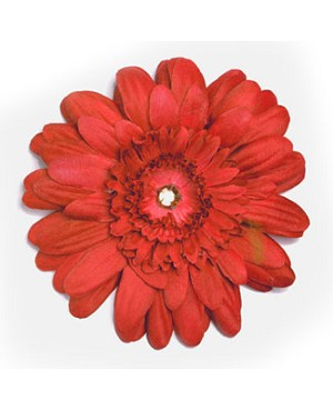 Z: Red Daisy Bloom