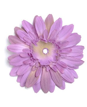 Z: Lavender Daisy Bloom