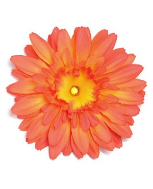 Z: Orange Daisy Bloom
